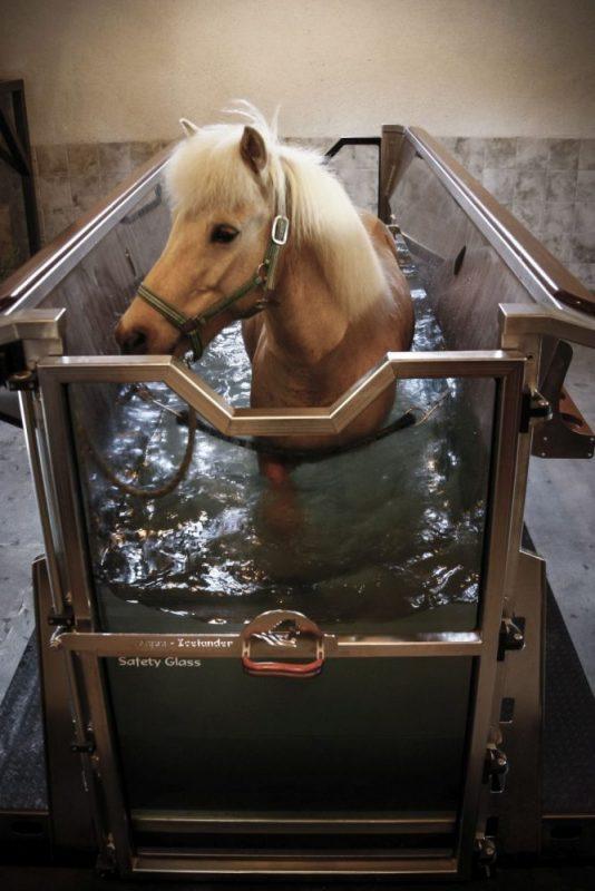 Pur Cheval - Balnéothérapie équine