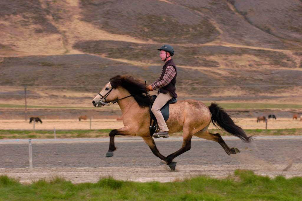 icelandic-horse-AMBLE