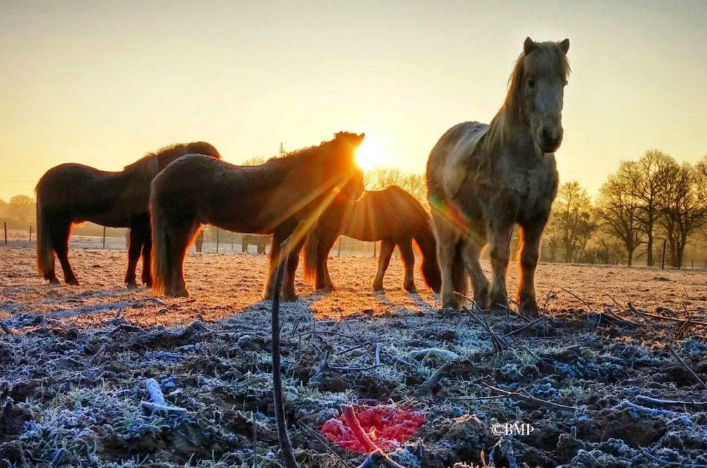 Chevaux au pré en hiver chez Pur Cheval