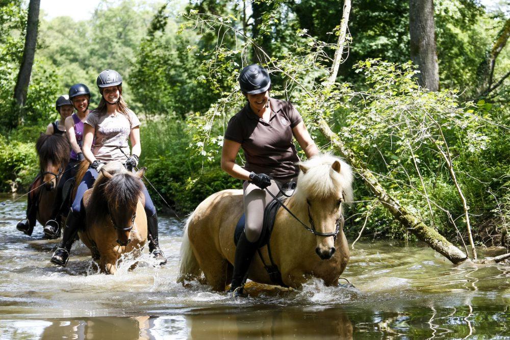 Baignade en rivière sur chevaux islandais chez Pur Cheval