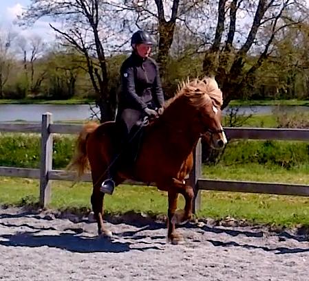 Copar de la Huilerie, cheval islandais chez Pur Cheval