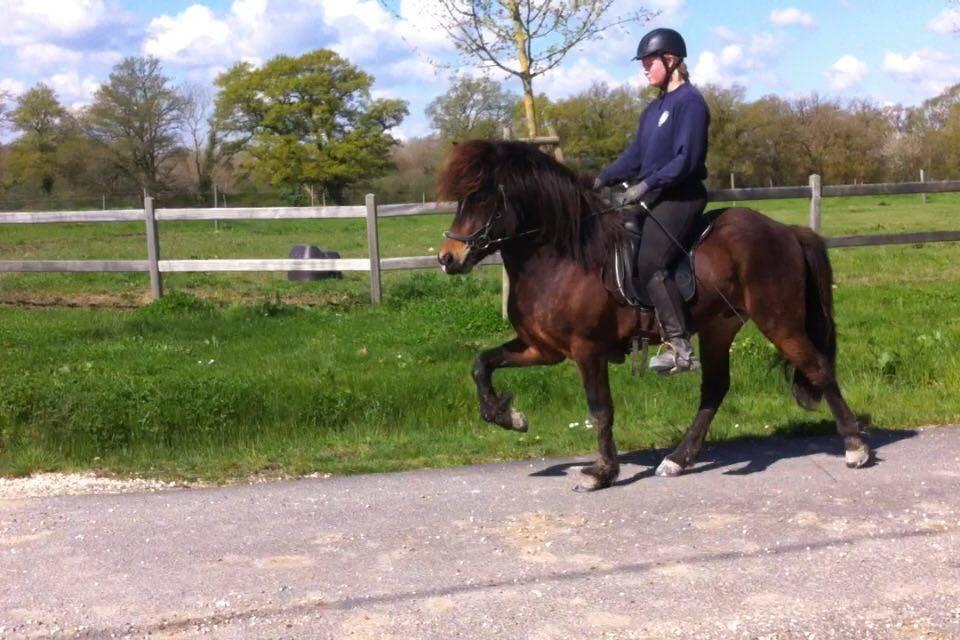 Gustur frá Miðhrauni, cheval islandais, au tölt chez Pur Cheval