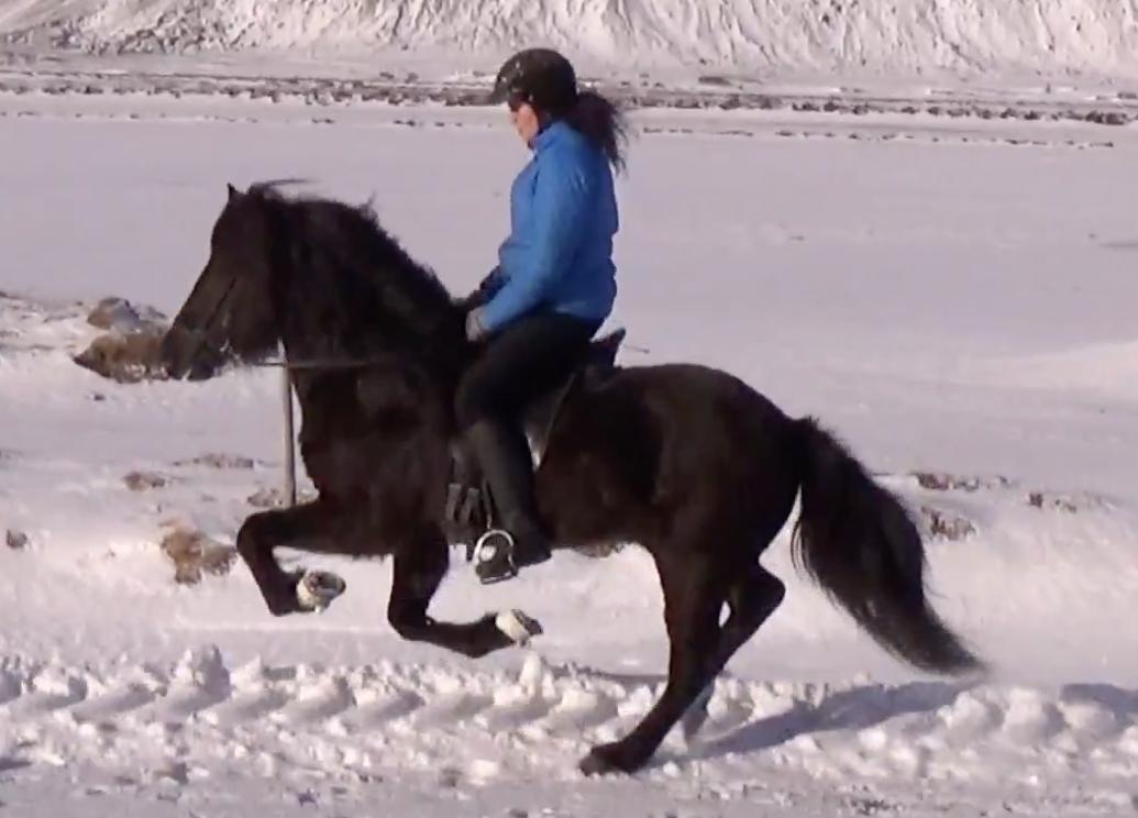 Kormákur frá Miðhrauni in gallop with Svanhvít Kristjánsdóttir riding for Pur Cheval