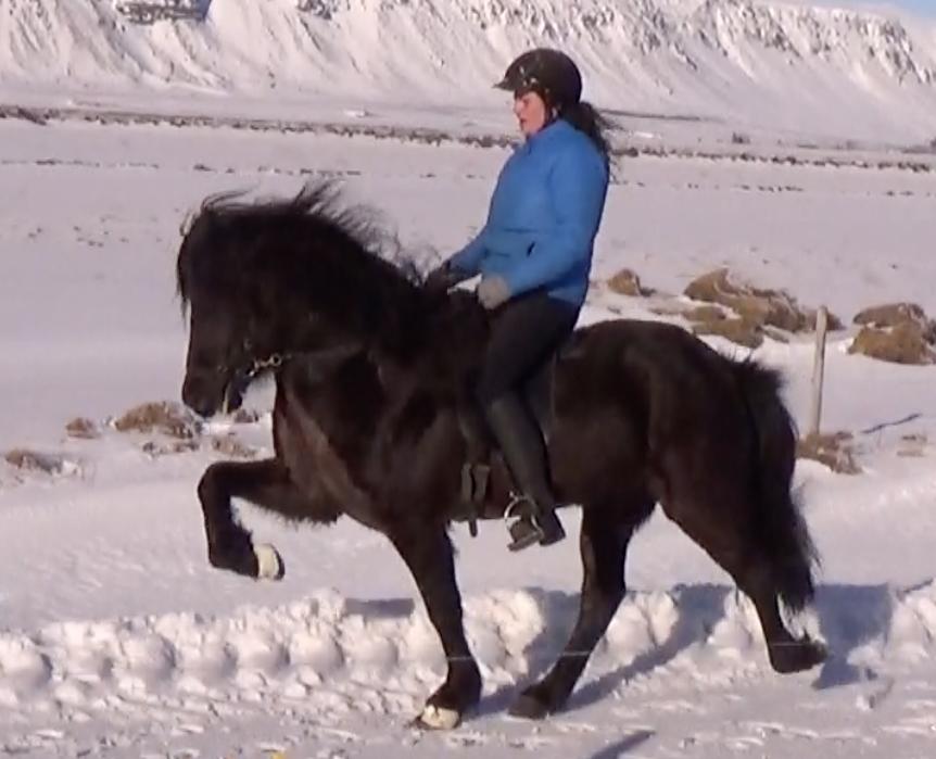 Kormákur frá Miðhrauni in tölt with Svanhvít Kristjánsdóttir riding for Pur Cheval