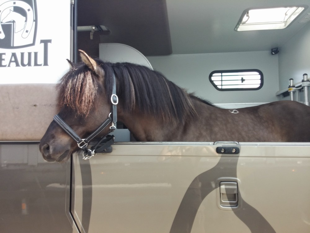 Transport de chevaux islandais par Pur Cheval