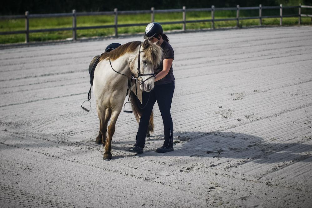 Travail d'un cheval islandais à pied chez Pur Cheval