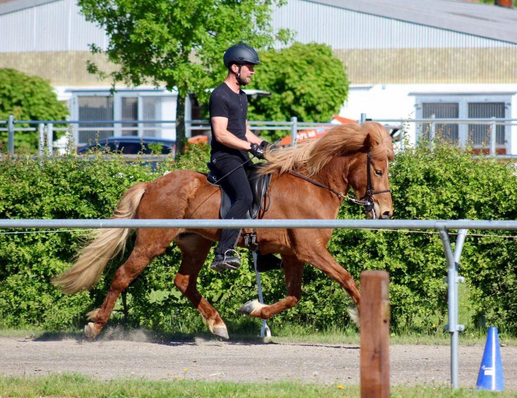 Cvika de la Huilerie jument premier prix de Pur cheval